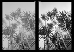 Screenshot. Left: JPEG file produced by Vuescan (I use these as previews to my pics, a bit as a contact sheet. Vuescan can do much better than that but it requires considerable work). Right: the picture after inverting the linear Tiff scan of the negative in ColorPerfect and processing the positive image in Lightroom.